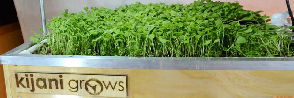 Grow food in your own home with an Internet-enabled Aquaponics Kit.